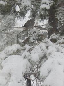 2015 04 17 snow 005