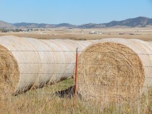 The hay bales... close to