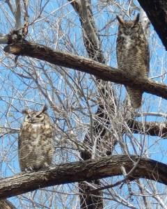 2015 05 10 owl 009