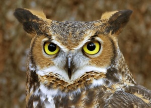2015 10 10 owl