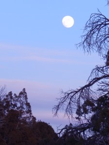 2016 01 23 moon 002