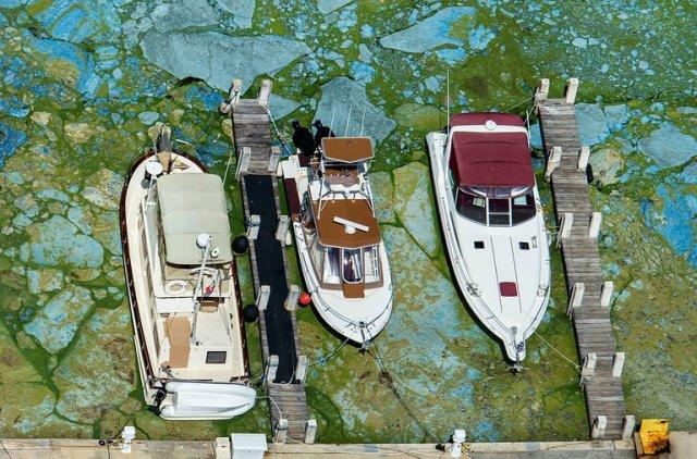 2018 toxic algae