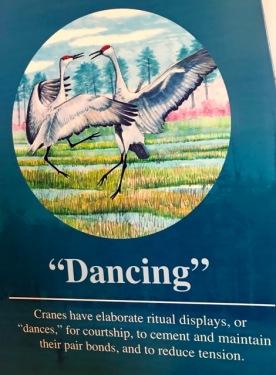 2019 03 dance cranes