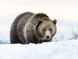 2020 03 20 bear pix
